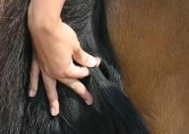 Pferdeschweifhaare
